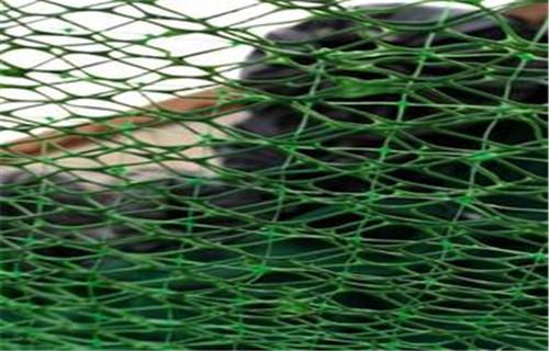 吉林三维喷播网施工快捷护坡绿化