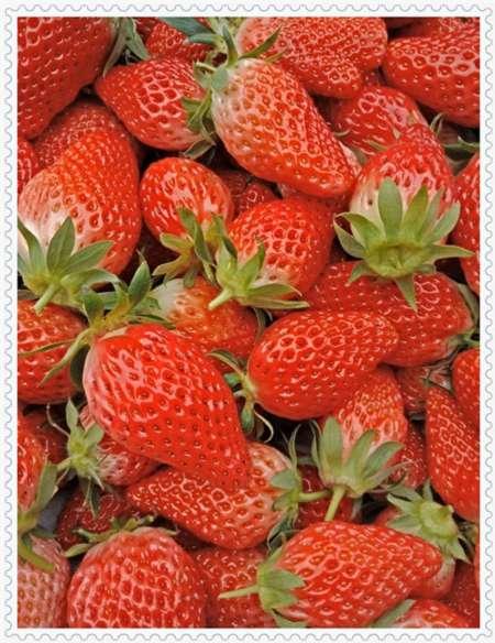 吉林红宝石草莓制作
