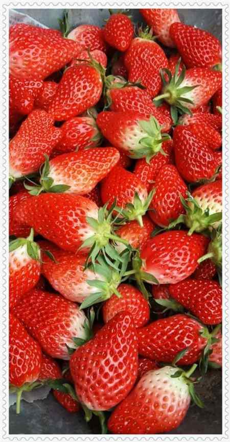 吉林法兰地草莓声名远扬