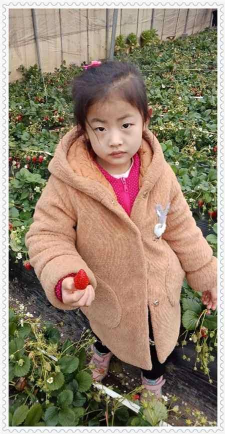 吉林秘宝草莓苗产量高