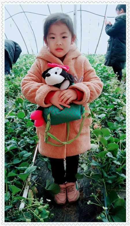 吉林天使之恋草莓苗产量高