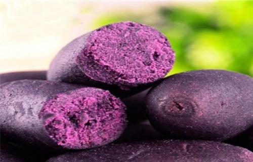 行情 嘉兴紫薯(东风八号)收购营养健康