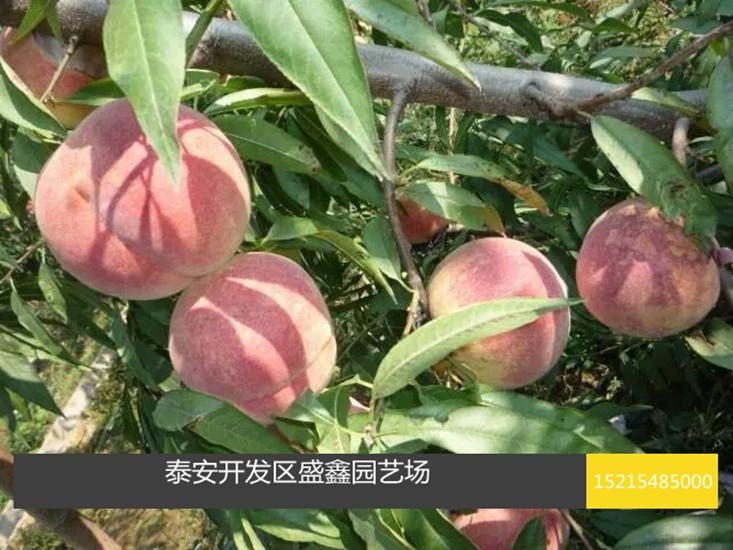 一般发芽前和果实迅速增长期各灌水一次,有利于果树正常生长发育和
